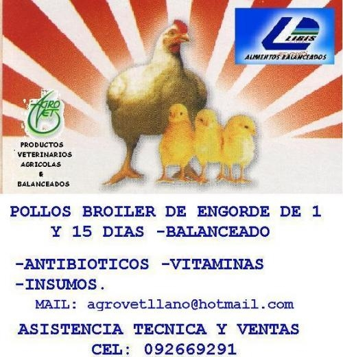 Pollo broiler bb, insumos-asistencia tecnica-balanceado