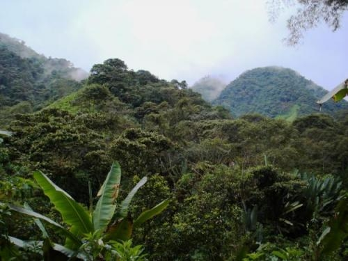 Venta de terrenos en mindo ecuador