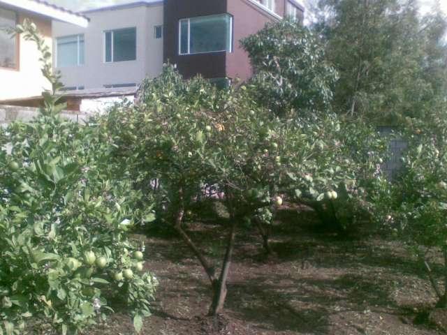 Frutales en el jardín