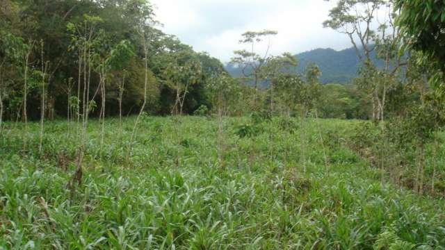 Fotos de Vendo terreno en somasunsci cerca de santa clara , clima muy bueno 6
