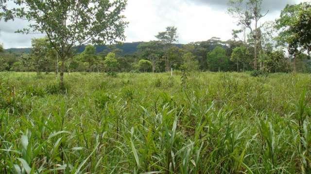 Fotos de Vendo terreno en somasunsci cerca de santa clara , clima muy bueno 1