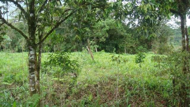 Fotos de Vendo terreno en somasunsci cerca de santa clara , clima muy bueno 5