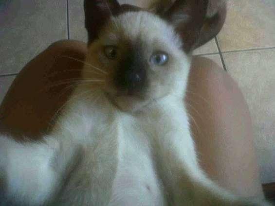 Si ven a esta gatita por favor llamar al 2735261 o al numero 0992169051 por favor avisarnos si la encuentra tiene 3 meses de edad la estamos buscando por favor avisar