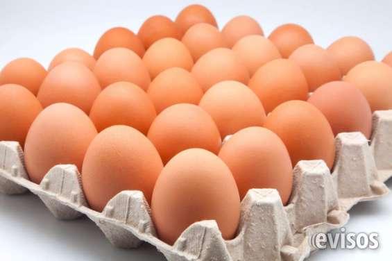 Compro huevos al por mayor