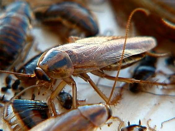 Fumigacion, expertos, ratas, cucarachas, mosquitos, y toda plaga existente
